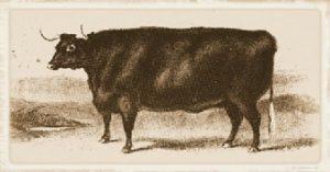 Sussex Beef